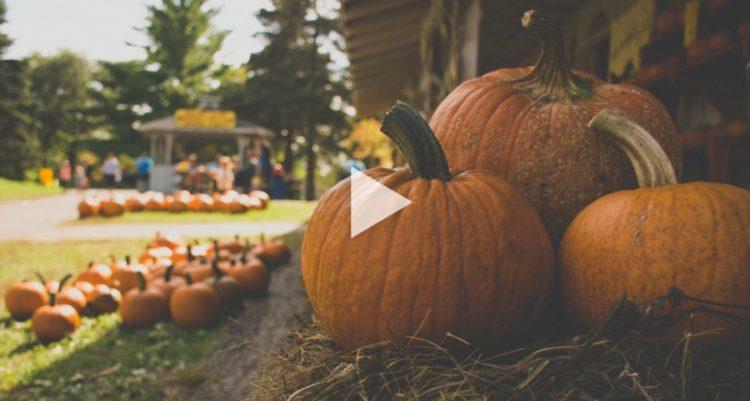 """""""Energize"""" Your Neighborhood with Energy-Themed Pumpkins"""